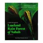A-walk-through-the-lowland-rain-forest-of-Sabah